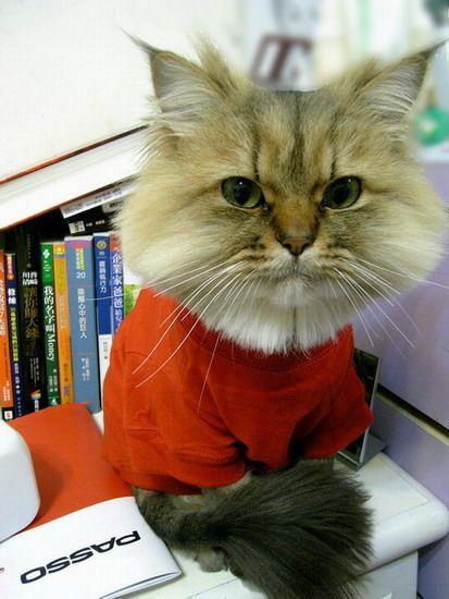 可爱猫咪照片欣赏!