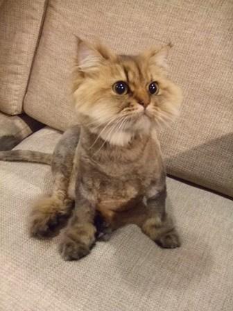 一些可爱猫咪的照片上来,供大家欣赏!