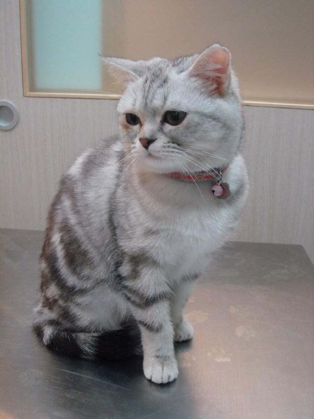 可爱猫咪照片分享!