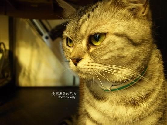 壁纸 动物 猫 猫咪 小猫 桌面 550_412