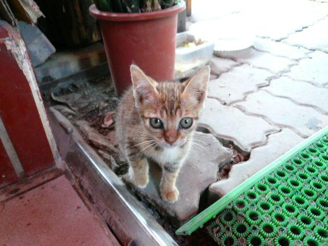 小貓咪認養....請大家幫忙喔~~(感恩)