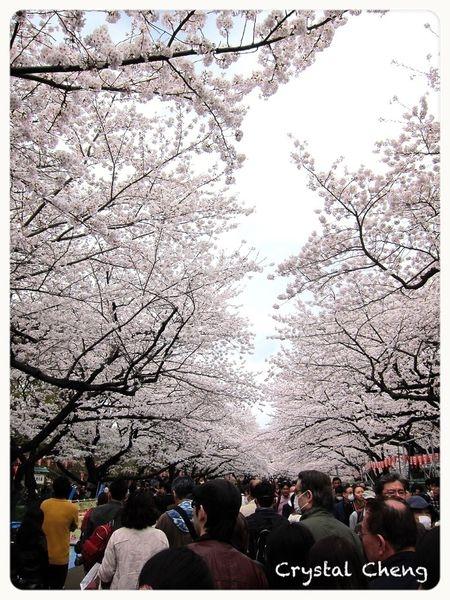 【2013東京自由行✈好玩推薦】上野恩賜公園 東京賞櫻怎麼能不來這咧!