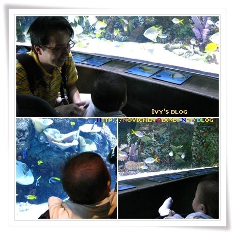 [8M3W] Aquarium_1.jpg