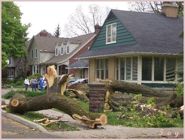 風災吹倒路邊的樹木...@@