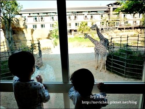 『住宿』新竹關西。小孩的天堂-六福莊