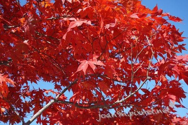《旅行》20141023北海道Day3+戰利品