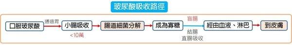 玻尿酸吸收路徑111