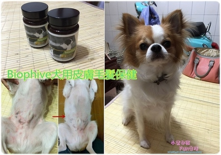 【心得】Biophive犬用皮膚毛髮保健配方,豆豆皮膚保健就靠它!持續吃皮膚就會看到改善,嗜口性佳喔!