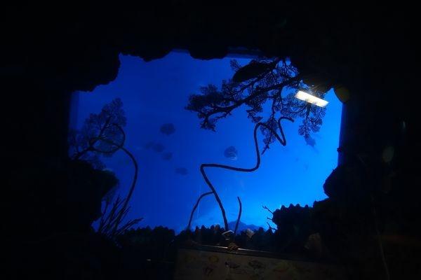 【心情】與海洋拉娜一同歡度2016年世界海洋日~帶小孩到海生館,一同體驗大海之美與愛護海洋生物