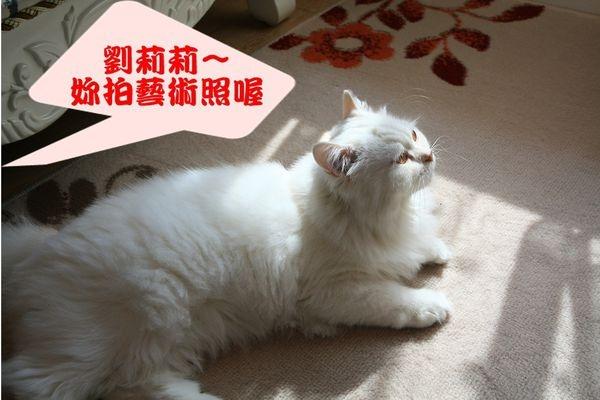 【寵物】陽光普照的溫暖下午