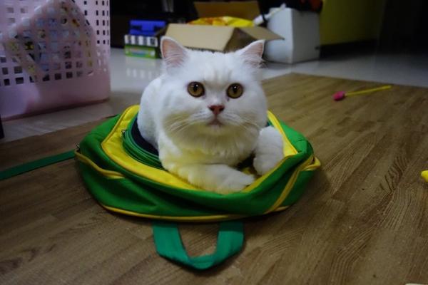 """【寵物】好貓不擋""""包"""""""