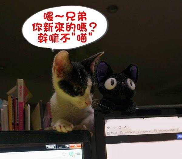 【寵物】喂~你新來的嗎?