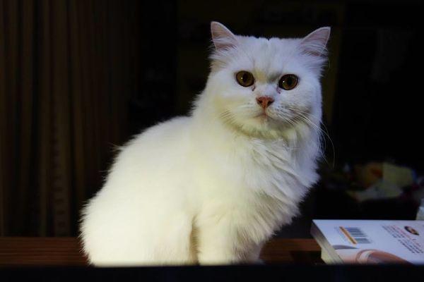 【寵物】莉莉貓終於剪毛了~毛大爺寵物生活館