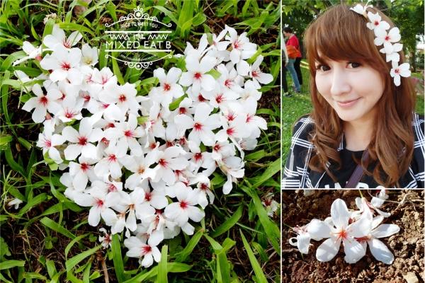 【愛玩耍】浪漫五月白雪║桃園龍潭-油桐花開之雪花飄~38阿花吹喇叭