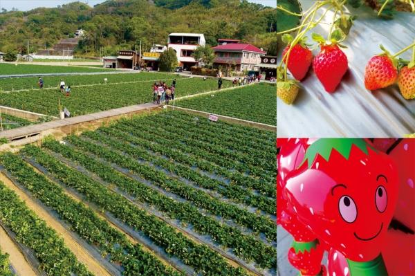 【愛玩耍】<苗栗大湖>2015草莓季~甜蜜滋味
