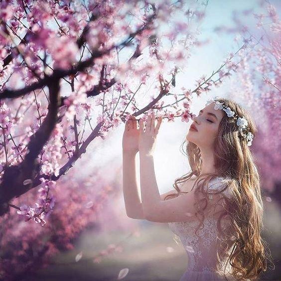 甜美粉嫩的櫻花香