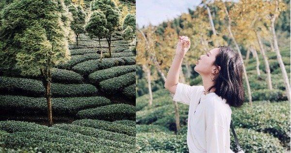 銀杏森林1.jpg