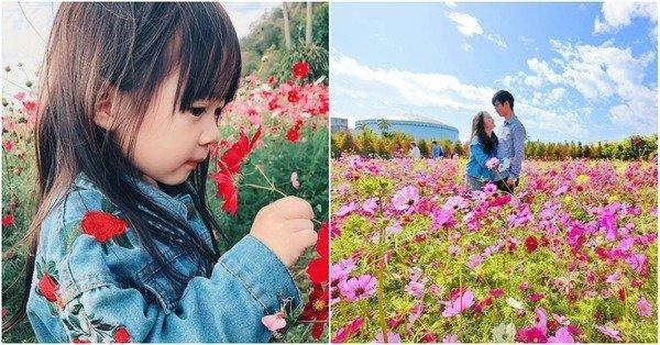 春節踏青花海.jpg