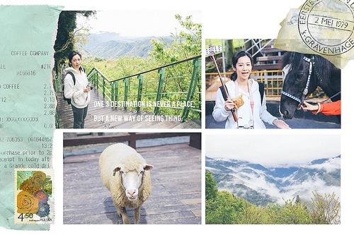 南投 清境Day2 清境農場 偶爾也要親近大自然 餵綿羊、馬術秀
