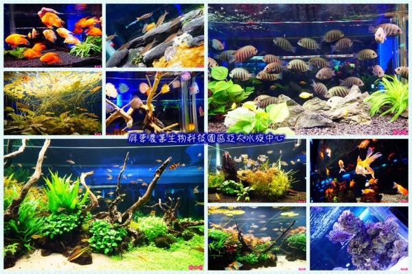 【屏東】♛屏東農業生物科技園區亞太水族中心♛美麗的海洋生態.多種魚類觀賞.有毒魚、弱電魚