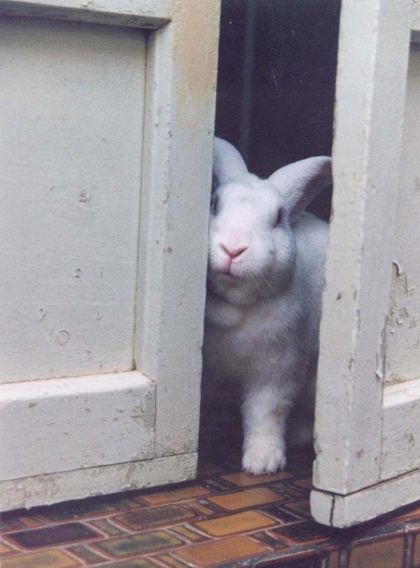 1. 兔子與棄養意示圖:兔子一旦被丟出門去流浪,存活機率極低 (2).jpg