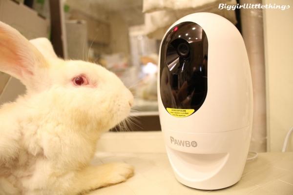 [ 寵物 ] 【Pawbo+三合一遠距互動寵物攝影機】★我最愛你★Pawbo Catch讓你時刻關照你的寵愛