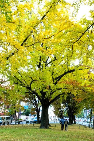 2013京都賞楓自由行~DAY2~從關西機場到京都車站