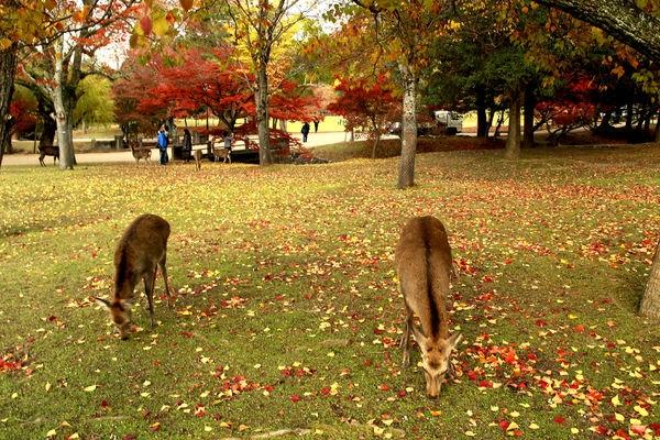 2013京都賞楓自由行~DAY10~奈良公園