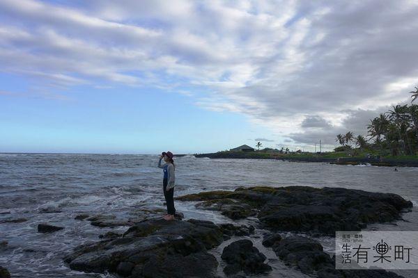 【夏威夷大島】希洛迷人Punalu'u黑沙灘:和海龜一起躺在沙灘上休息吧!