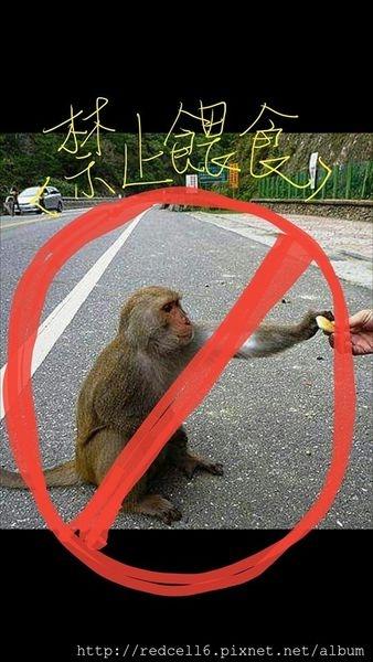 「台東縣野生動物保護自治條例」草案三讀通過~在台東特定公共場所餵食動物將開罰!