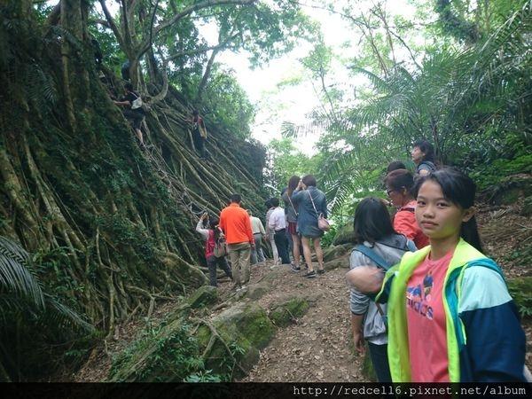 Tripbaa 趣吧!到台東鸞山森林博物館去尋找會走路的樹 部落生態旅遊心得分享