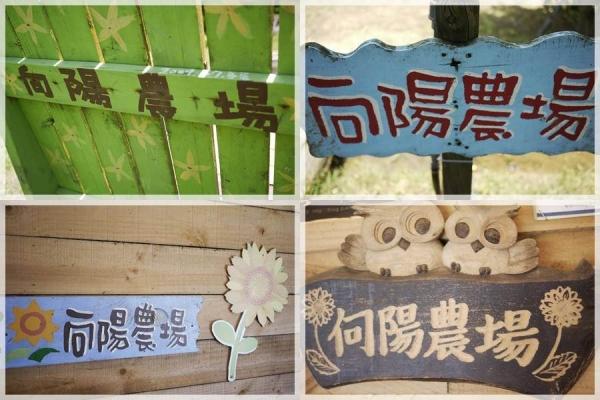 (桃園觀音)向陽農場~藍天白雲下的向日葵花田。林家古厝~百年建築看小鴨。