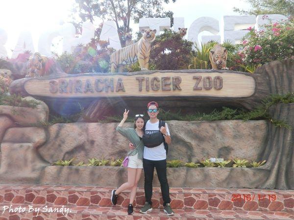 【泰國】芭達雅必去是拉差老虎園 Sriracha Tiger Zoo必玩三大重點