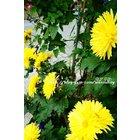 Thumb_9094c9ed-6ffd-41c8-8f06-164774357ee3