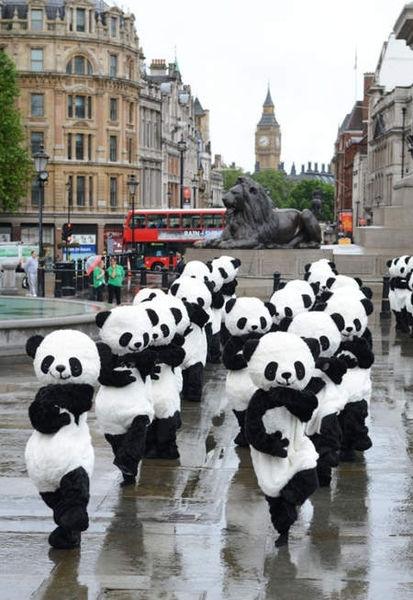 [活動] 2012年Panda Quest成都熊貓守護使