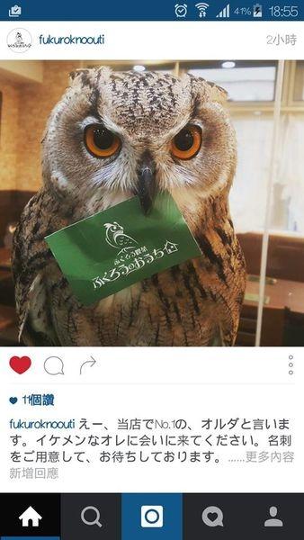 [日本 巢鴨] 現在日本最火紅的貓頭鷹咖啡!!真的是太療癒啦!!!