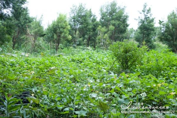 波尼塔香草花園