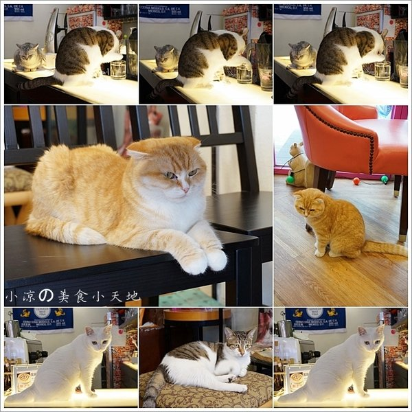 336585bd c880 4108 a007 534cb2e7244d - (熱血採訪)隱藏在寧靜巷弄內的貓餐廳─IVORY TOWER CAF'E 象牙塔咖啡