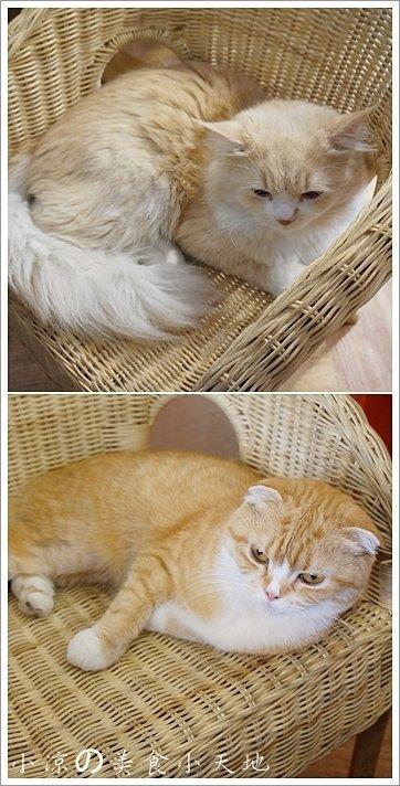 3bb89930 1998 4b61 9d63 6ad1aac1726f - (熱血採訪)隱藏在寧靜巷弄內的貓餐廳─IVORY TOWER CAF'E 象牙塔咖啡