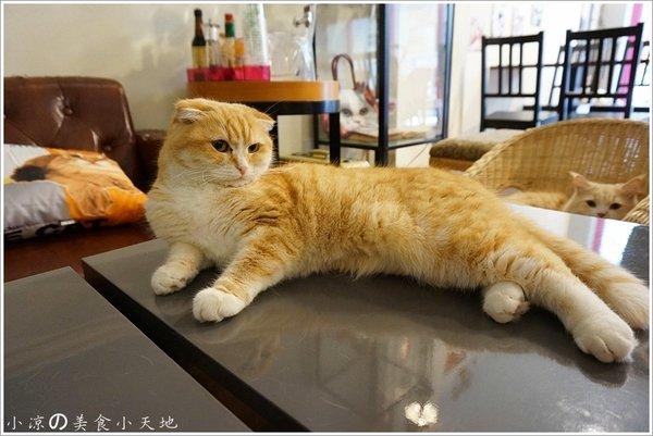 78247d9a c2fc 473c b5da 15b69ce7f498 - (熱血採訪)隱藏在寧靜巷弄內的貓餐廳─IVORY TOWER CAF'E 象牙塔咖啡