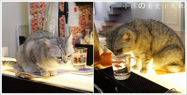 aace11f1 51d2 461f bb68 798bb4e68633 - (熱血採訪)隱藏在寧靜巷弄內的貓餐廳─IVORY TOWER CAF'E 象牙塔咖啡