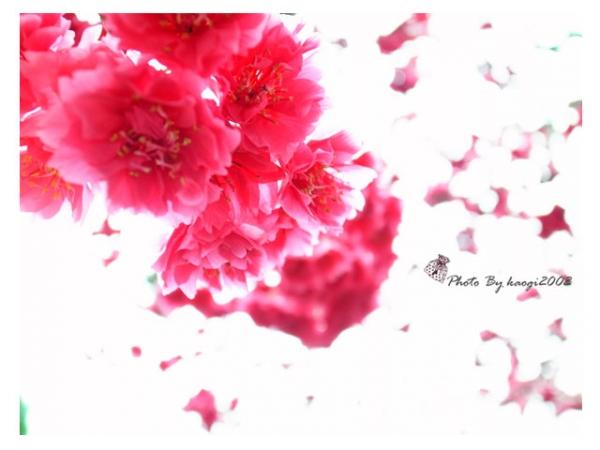 【我愛照相】讓人重新愛上攝影的GRD♥
