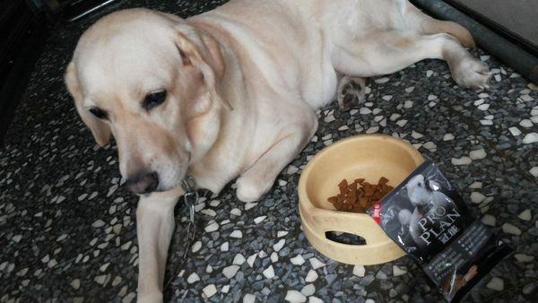 Q妮子/// 雀巢 普瑞納寵物食品 冠能食品顛峰潛能計畫~幫你寶貝的健康把關 ///