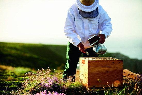 烏埃尚島 (13)_養蜂人保護培育獨一無二的布列塔尼生態型黑蜂.jpg