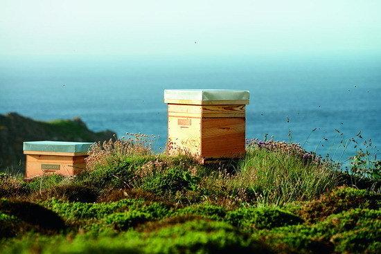 烏埃尚島 (10)_嬌蘭蜂巢於烏埃尚島.jpg