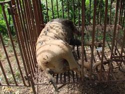 《十萬伙集》部落格串連 - 為旗山2百受虐犬募救命飼料