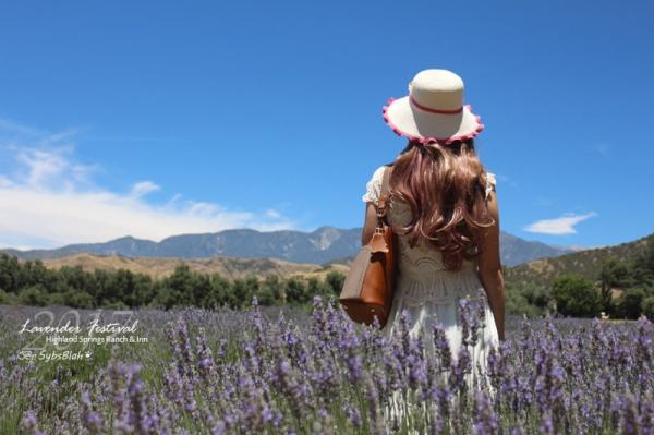 週末的薰衣草花祭 @南加州最大的有機薰衣草農場123 Farm