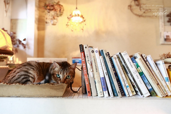【逼先生專欄】《黑兔兔的散步生活屋》:隱藏二樓的療癒咖啡館