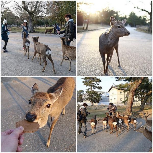 【逼先生專欄】《狂買狂吃大阪自由行》Day04:來去奈良看小鹿!!!