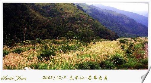 [泡湯]<br/>太平山-神秘排骨溪野溪溫泉(上)芒草之美
